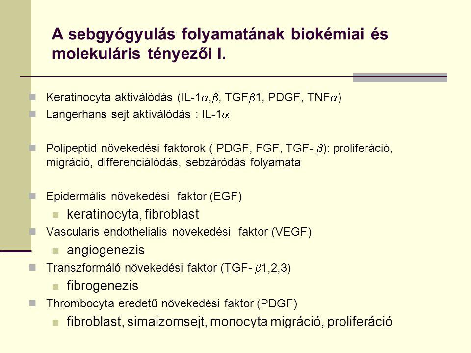 A sebgyógyulás folyamatának biokémiai és molekuláris tényezői I. Keratinocyta aktiválódás (IL-1 , , TGF  1, PDGF, TNF  ) Langerhans sejt aktiválód