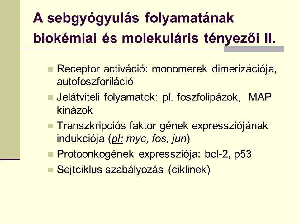 A sebgyógyulás folyamatának biokémiai és molekuláris tényezői II. Receptor activáció: monomerek dimerizációja, autofoszforiláció Jelátviteli folyamato