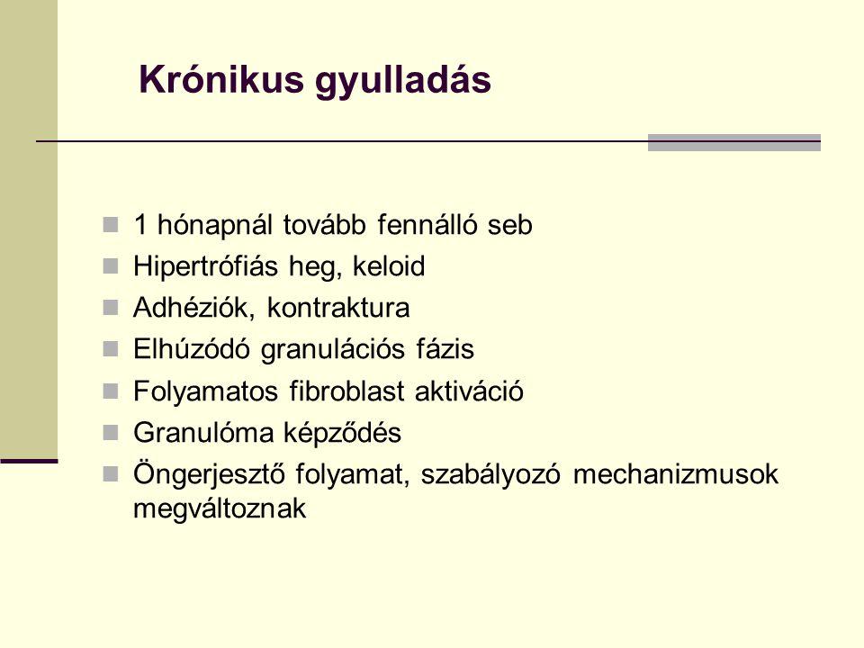 Krónikus gyulladás 1 hónapnál tovább fennálló seb Hipertrófiás heg, keloid Adhéziók, kontraktura Elhúzódó granulációs fázis Folyamatos fibroblast akti