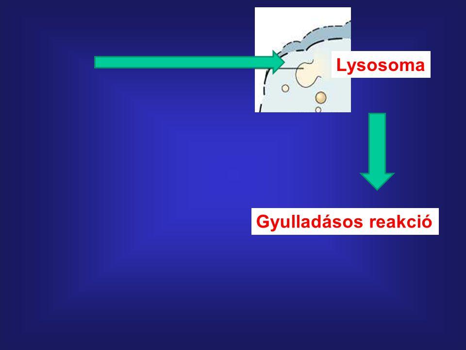 Lysosoma Gyulladásos reakció