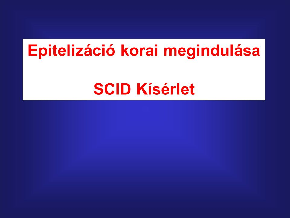 Epitelizáció korai megindulása SCID Kísérlet