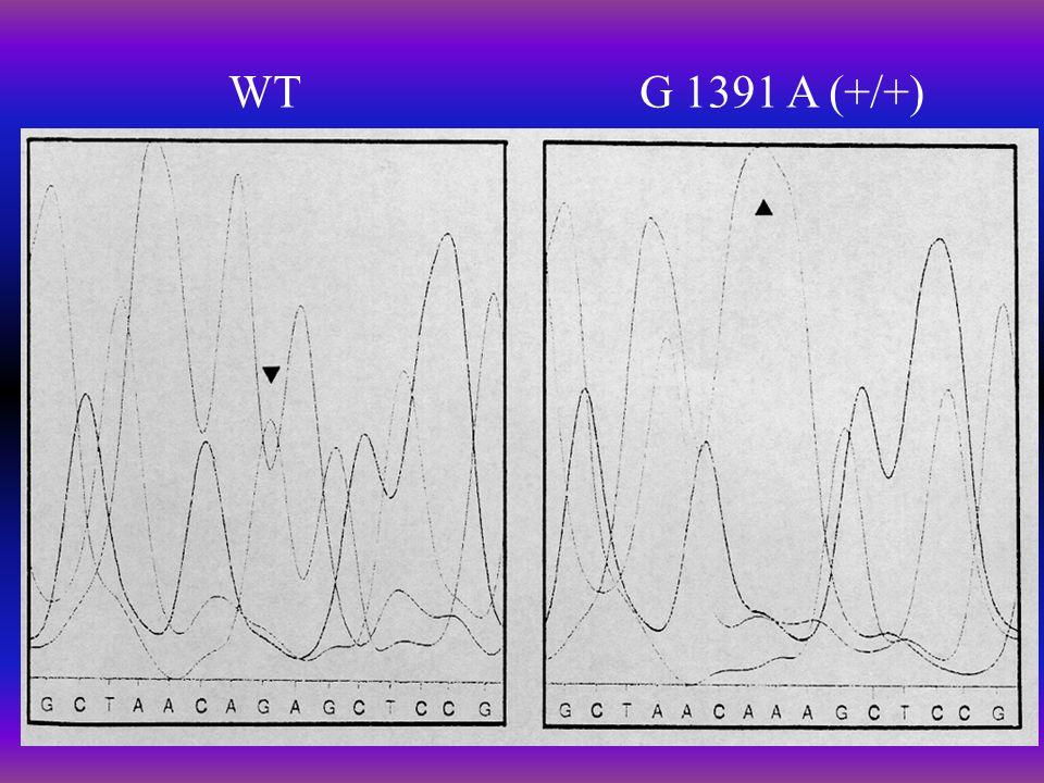 WTG 1391 A (+/+)