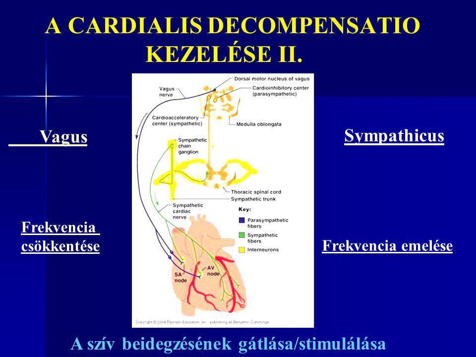 A CARDIALIS DECOMPENSATIO KEZELÉSE II. Vagus Sympathicus Frekvencia csökkentése Frekvencia emelése A szív beidegzésének gátlása/stimulálása
