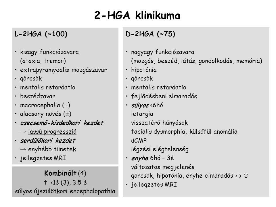 2-HGA klinikuma L-2HGA (~100) kisagy funkciózavara (ataxia, tremor) extrapyramydalis mozgászavar görcsök mentalis retardatio beszédzavar macrocephalia (  ) alacsony növés (  ) csecsemő-kisdedkori kezdet → lassú progresszió serdülőkori kezdet → enyhébb tünetek jellegzetes MRI D-2HGA (~75) nagyagy funkciózavara (mozgás, beszéd, látás, gondolkodás, memória) hipotónia görcsök mentalis retardatio fejlődésbeni elmaradás súlyos <6hó letargia visszatérő hányások facialis dysmorphia, külsőfül anomália d CMP légzési elégtelenség enyhe 6hó – 3é változatos megjelenés görcsök, hipotónia, enyhe elmaradás   jellegzetes MRI Kombinált (4)  <1é (3), 3.5 é súlyos újszülötkori encephalopathia