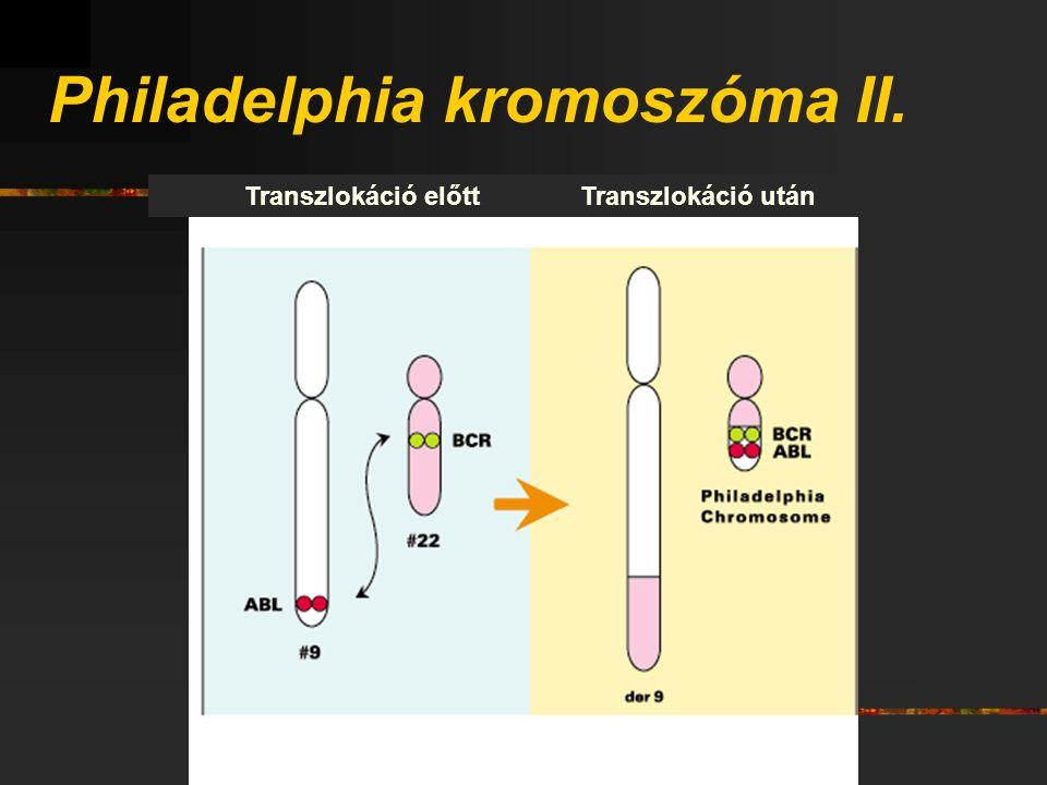 Philadelphia kromoszóma II. Transzlokáció előttTranszlokáció után