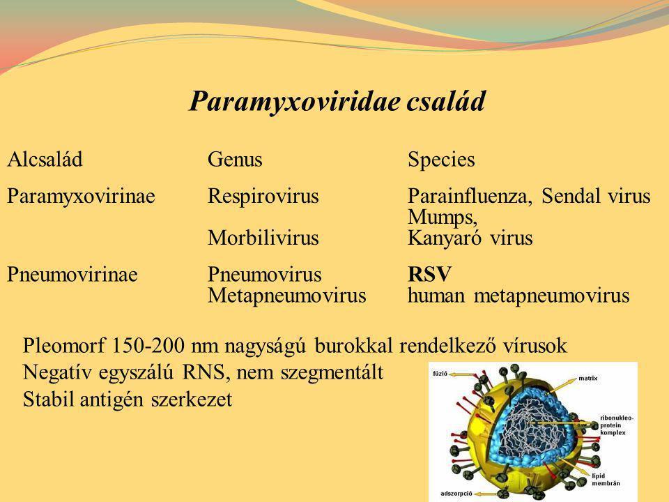"""Terjedés: Cseppfertőzés Tárgyak közvetítésével (Nosocomiális fertőzés) Lappangási idő: 5 nap Betegség időtartama: 8-15 nap Respiratory syncytial virus (RSV) Felső és alsó légúti tünetek: főleg kisgyermekekben, csecsemőkben, súlyos alsó légúti tünetek: bronchiolitis, pneumonia, bronchitis, felnőttekben """"náthaszerű megbetegedés reinfekció gyakori Kezelés: ribavirin, tüneti terápia Prevenció: palivizumab, motavizumab human monoclonalis antitest Diagnózis: IF, virus izolálás, szerológia"""