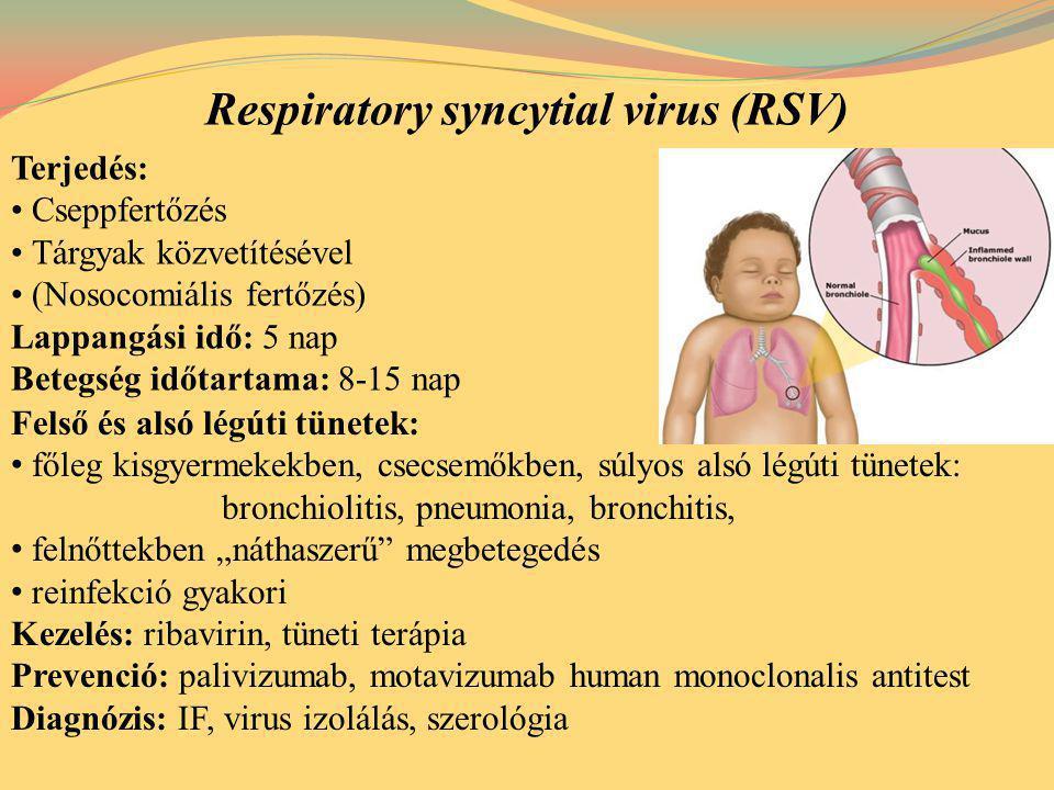 Terjedés: Cseppfertőzés Tárgyak közvetítésével (Nosocomiális fertőzés) Lappangási idő: 5 nap Betegség időtartama: 8-15 nap Respiratory syncytial virus