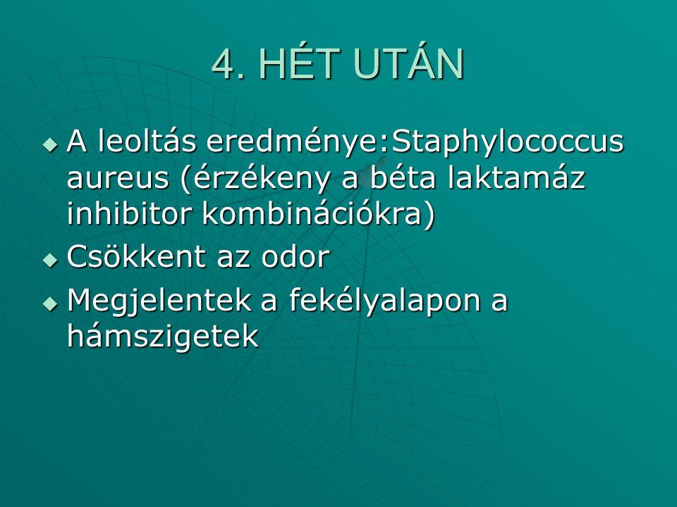 4. HÉT UTÁN  A leoltás eredménye:Staphylococcus aureus (érzékeny a béta laktamáz inhibitor kombinációkra)  Csökkent az odor  Megjelentek a fekélyal