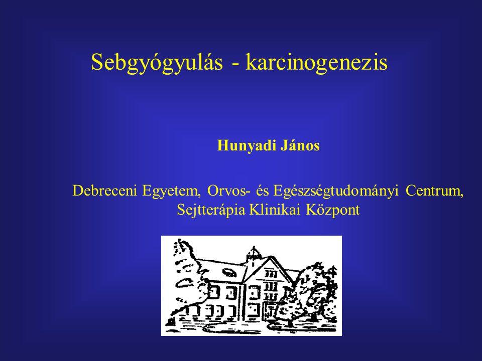 Hunyadi János Debreceni Egyetem, Orvos- és Egészségtudományi Centrum, Sejtterápia Klinikai Központ Sebgyógyulás - karcinogenezis