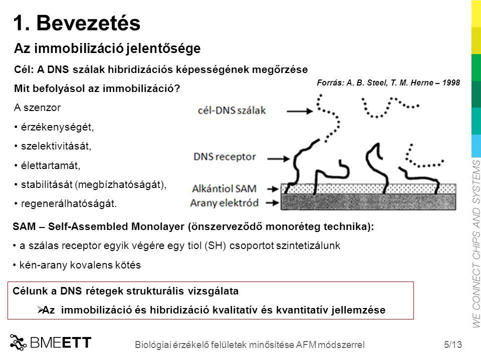 /13 Forrás: A. B. Steel, T. M. Herne – 1998 5 Biológiai érzékelő felületek minősítése AFM módszerrel Az immobilizáció jelentősége Cél: A DNS szálak hi
