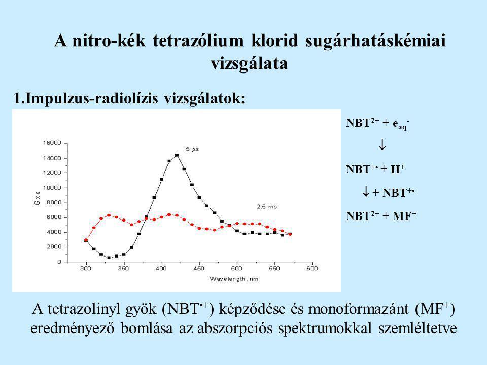 A nitro-kék tetrazólium klorid sugárhatáskémiai vizsgálata 1.Impulzus-radiolízis vizsgálatok: NBT 2+ + e aq -  NBT + + H +  + NBT + NBT 2+ + MF + A tetrazolinyl gyök (NBT+ ) képződése és monoformazánt (MF + ) eredményező bomlása az abszorpciós spektrumokkal szemléltetve