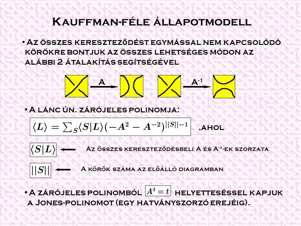 Kauffman-féle állapotmodell Az összes keresztez ő dést egymással nem kapcsolódó körökre bontjuk az összes lehetséges módon az alábbi 2 átalakítás segítségével A lánc ún.