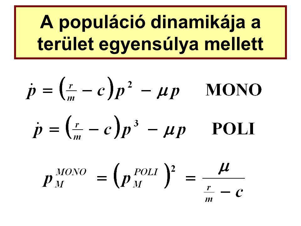 A populáció dinamikája a terület egyensúlya mellett