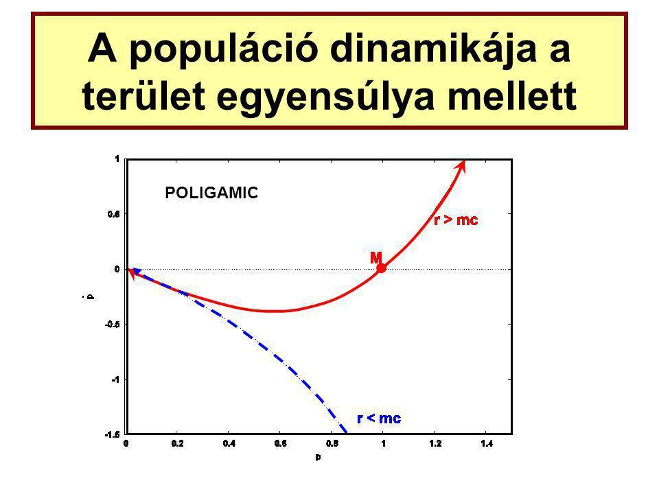A populáció dinamikája a terület egyensúlya mellett POLIGAMIC