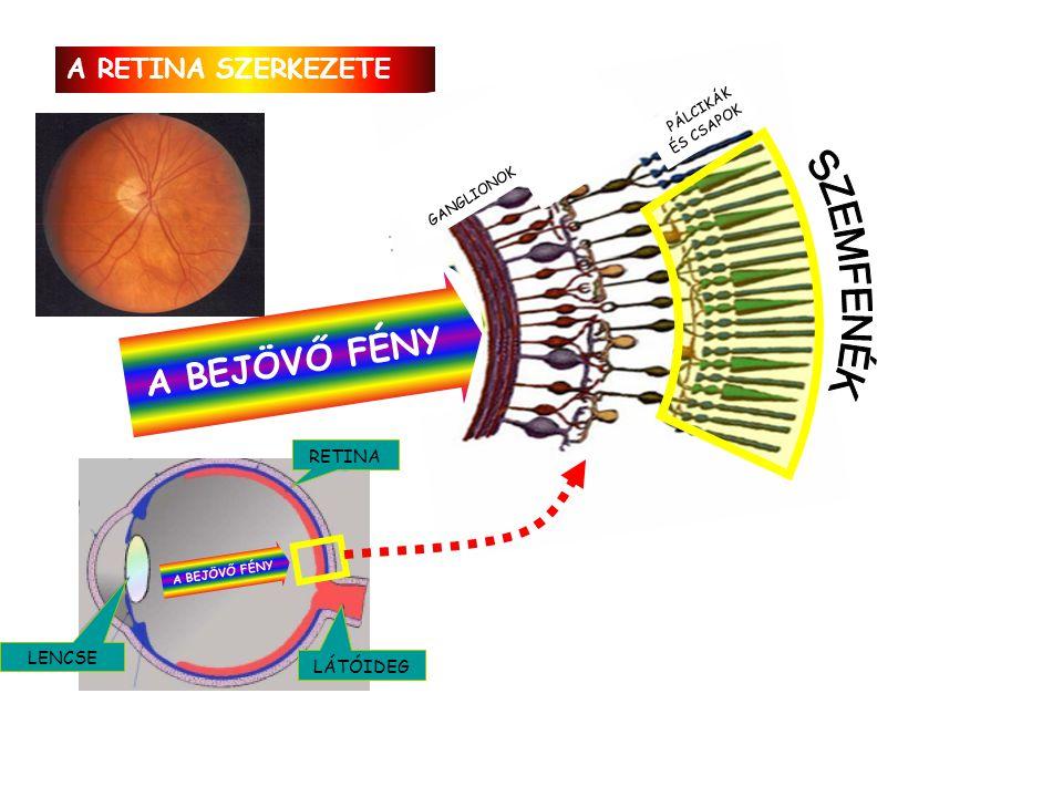 A retina szerkezete. Mi a különbség az emberi szem és tintahalak szeme között? Hogyan látjuk a színeket? Milyen éles a látásunk? (A szem felbontóképes