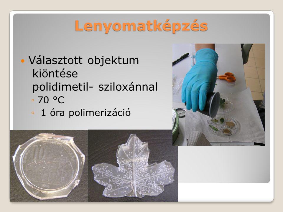 Lenyomatképzés Választott objektum kiöntése polidimetil- sziloxánnal ◦70 °C ◦ 1 óra polimerizáció