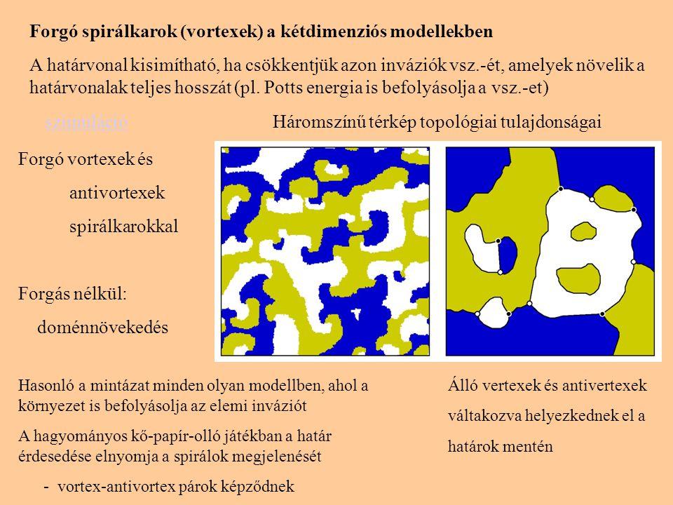 Forgó spirálkarok (vortexek) a kétdimenziós modellekben A határvonal kisimítható, ha csökkentjük azon inváziók vsz.-ét, amelyek növelik a határvonalak