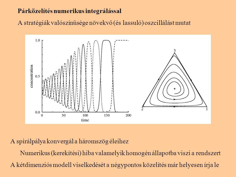 Evolúciós kő-papír-olló játék Bethe rácson (z=3) Szimuláció (véletlen reguláris gráfon nagy N-nél): oszcilláció → határciklus (vastag folytonos vonal) Átlagtér-közelítés: periodikus visszatérés a kezdőállapotba (koncentrikus pályák) Párközelítés: növekvő oszcillálás (végül valamelyik homogén állapot) Hatpontos közelítés: oszcilláció tart a határciklushoz (szaggatott vonal) Monte Carlo szimulációk: Hasonló viselkedés, ha z=4 A párközelítés jóslata teljesül, ha z ≥ 6 Hasonló viselkedés a négyzetrácson, ha játékosaink Q vsz-gel választanak tetszőlegesen távoli társat.