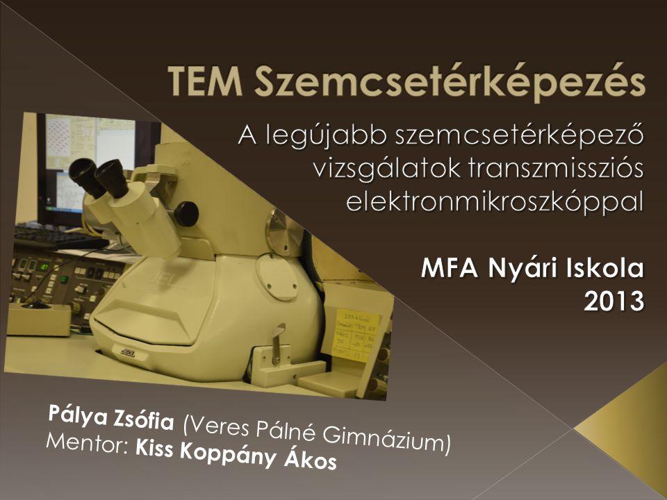 Pálya Zsófia (Veres Pálné Gimnázium) Mentor: Kiss Koppány Ákos