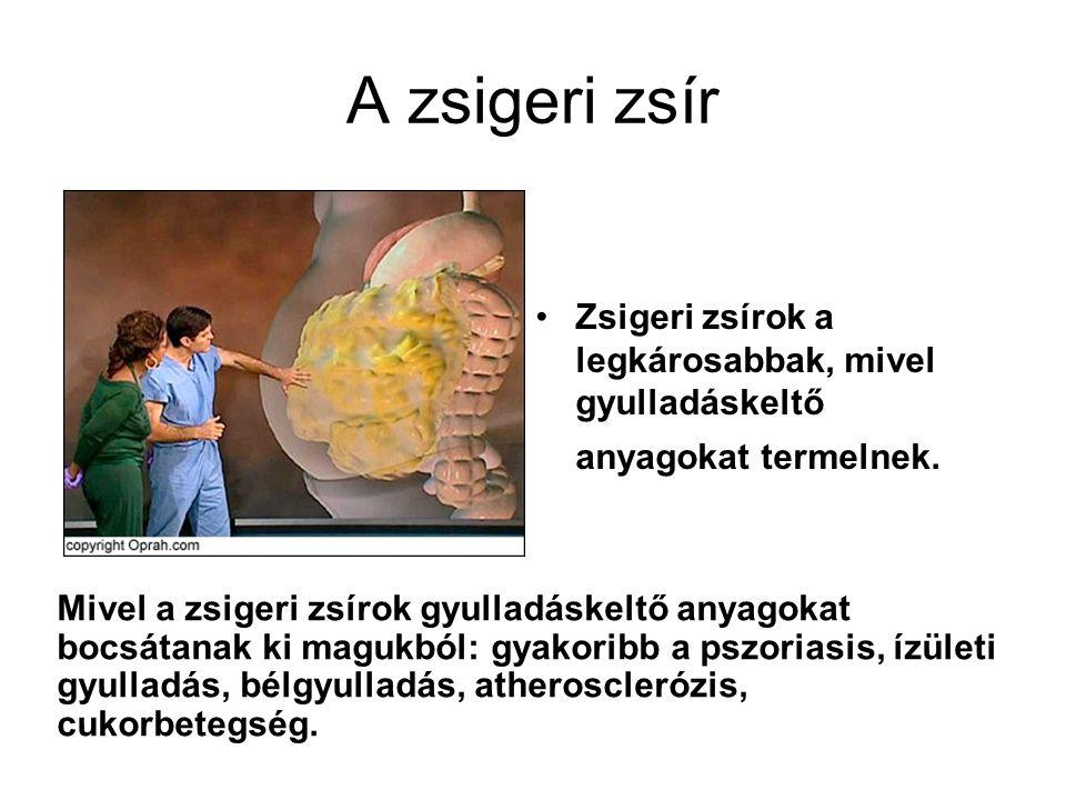 A zsigeri zsír Zsigeri zsírok a legkárosabbak, mivel gyulladáskeltő anyagokat termelnek. Mivel a zsigeri zsírok gyulladáskeltő anyagokat bocsátanak ki