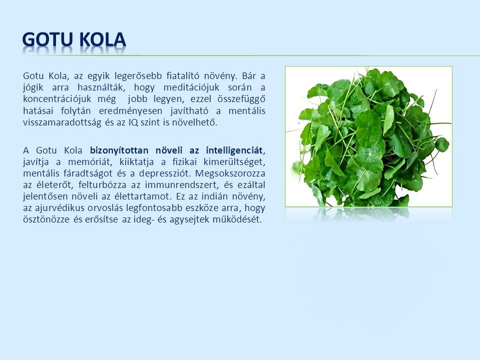Gotu Kola, az egyik legerősebb fiatalító növény. Bár a jógik arra használták, hogy meditációjuk során a koncentrációjuk még jobb legyen, ezzel összefü