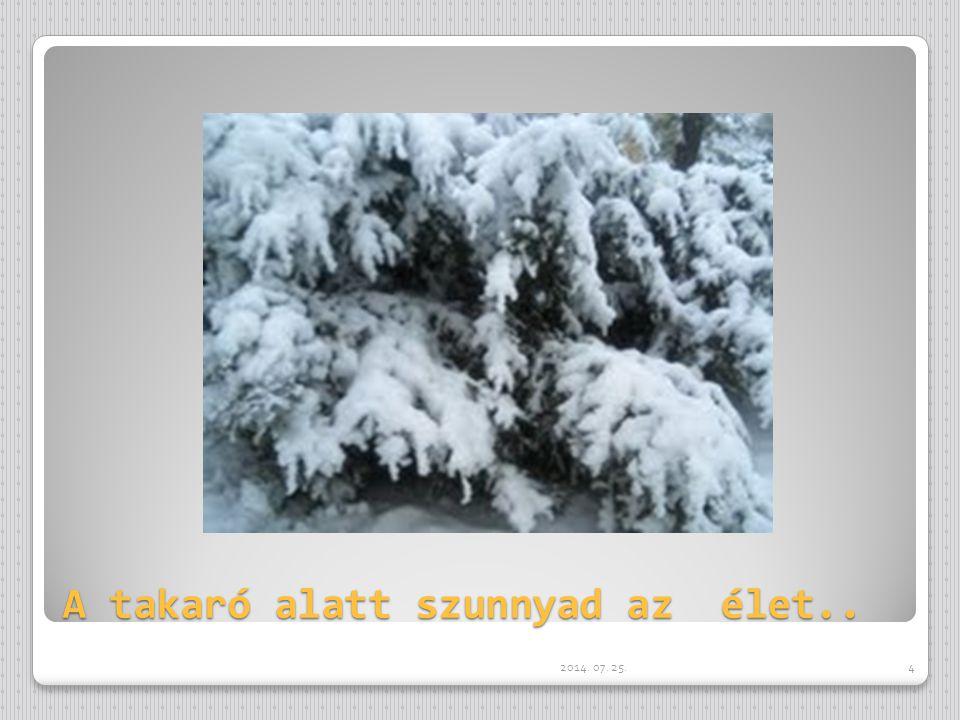 A kihalt utak porát befedte a hó, s a fákat a dér.. 2014. 07. 25.3