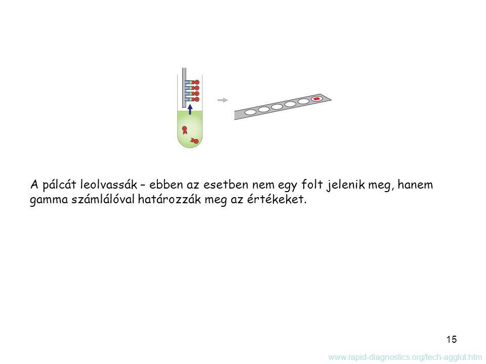 15 A pálcát leolvassák – ebben az esetben nem egy folt jelenik meg, hanem gamma számlálóval határozzák meg az értékeket. www.rapid-diagnostics.org/tec