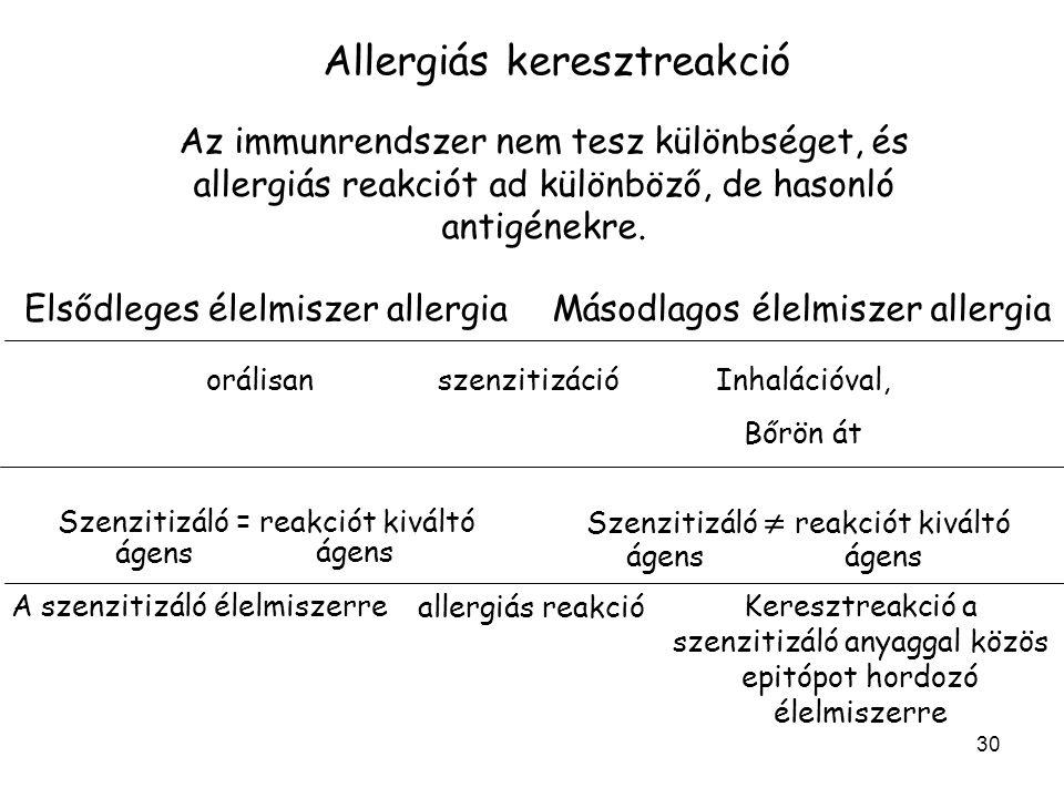 30 Allergiás keresztreakció Az immunrendszer nem tesz különbséget, és allergiás reakciót ad különböző, de hasonló antigénekre. Elsődleges élelmiszer a