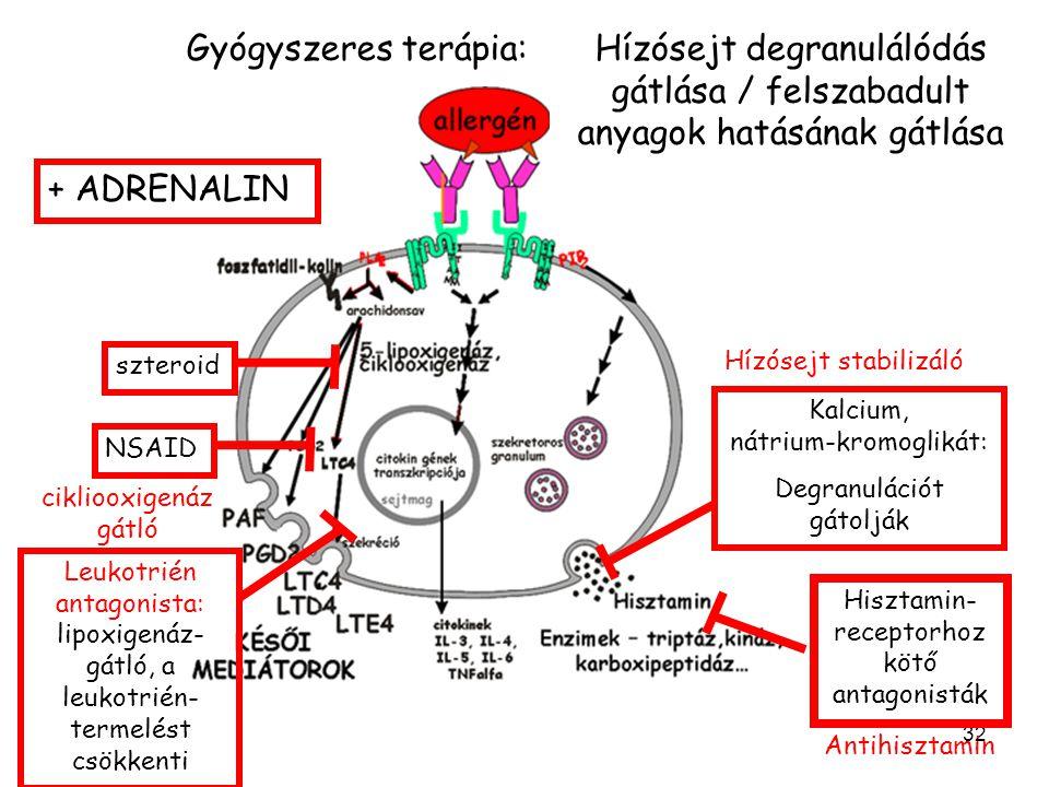 32 Kalcium, nátrium-kromoglikát: Degranulációt gátolják Hisztamin- receptorhoz kötő antagonisták Hízósejt stabilizáló szteroid NSAID cikliooxigenáz gátló Leukotrién antagonista: lipoxigenáz- gátló, a leukotrién- termelést csökkenti + ADRENALIN Hízósejt degranulálódás gátlása / felszabadult anyagok hatásának gátlása Antihisztamin Gyógyszeres terápia: