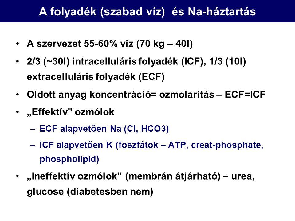 K háztartás ECF: 3-5,5 mmol/l, ICF 150 mmol/l (1:38 arány) 2 szérum K ~ 400 mmol K deficit ECF→ICF shift –Inzulin, beta2 agonisták, alkalosis, ICF→ECF shift –Sejtszétesés, hyperosmolaritás (DKA), acidosis Napi bevitel: 40-120 mmol Kiválasztás két feltétele –Tubuláris áramlás –negatív tubuláris töltés Mineralocorticoid hatás Nem felszívódó anionok (keton, HCO3, toluene)