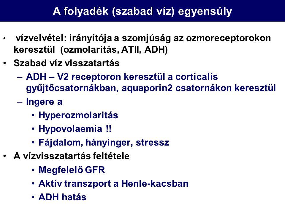 Hyponatraemia Panaszok/tünetek –ECF →ICF vízáramlás: intracellularis oedema –Súlyosság a kialakulás sebességétől és abszolút értékétől függ –Elsősorban CNS tünetek: hányinger, gyengeség, meglassultság, lethargia, coma Diagnózis –Szérum/vizelet ozmolaritás –Volumen status –Vizelet Na koncentráció