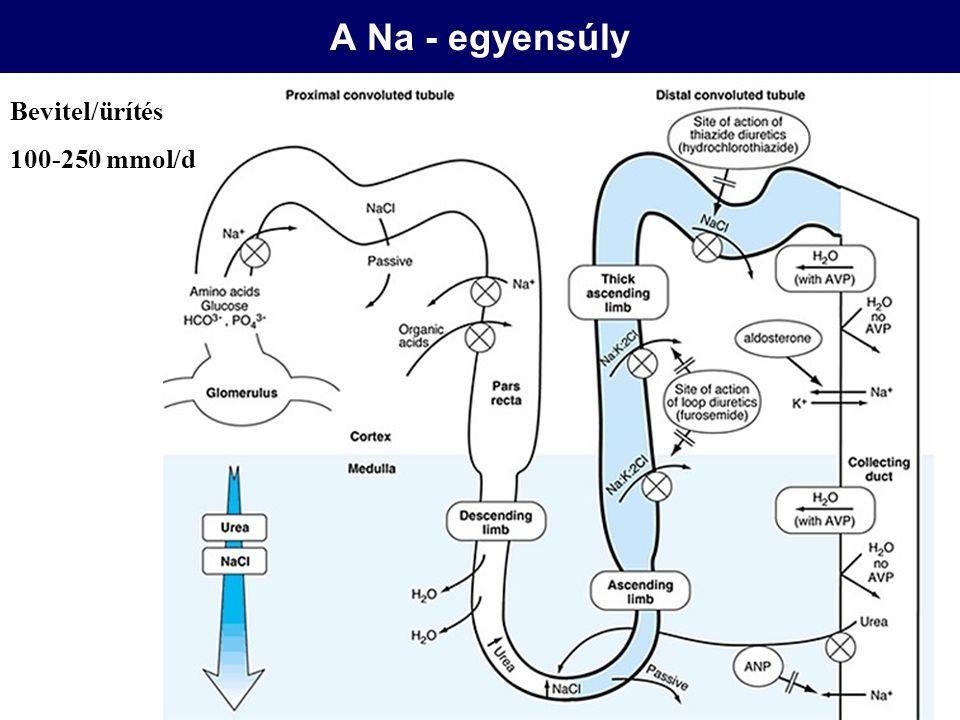 Hypokalaemia <3 mmol/l –Izomgyengeség, hypoventilláció, paralysis, rhabdomyolysis –EKG: lapos T-k, magas U-k, PR megnyúlás, kamrai arrhythmia, digitalis toxicitás Diagnózis –Pseudohypokalaemia (leukaemia) –ICF shift – anamnézis –Vizelet K (<15 mmol/l) –TTKG (transtubularis K gradiens) A corticalis gyűjtőcsatorna intraluminális vs.