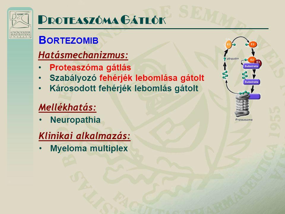 P ROTEASZÓMA G ÁTLÓK Hatásmechanizmus: Proteaszóma gátlás Szabályozó fehérjék lebomlása gátolt Károsodott fehérjék lebomlás gátolt B ORTEZOMIB Mellékh