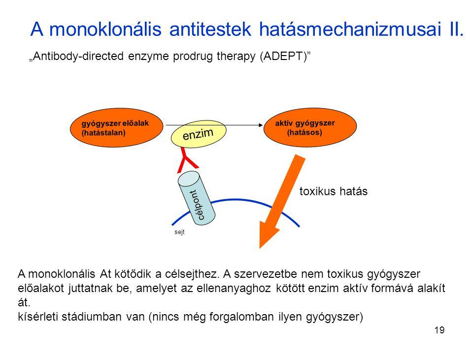19 A monoklonális antitestek hatásmechanizmusai II.