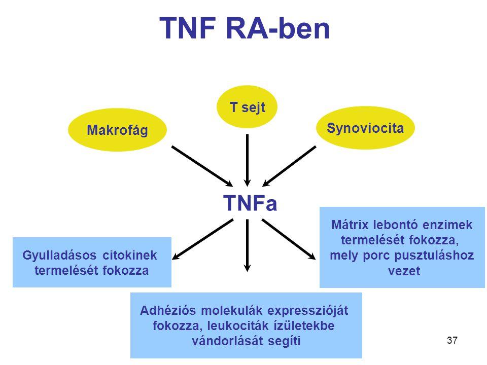 37 TNF RA-ben Synoviocita T sejt Makrofág Gyulladásos citokinek termelését fokozza Adhéziós molekulák expresszióját fokozza, leukociták ízületekbe vándorlását segíti Mátrix lebontó enzimek termelését fokozza, mely porc pusztuláshoz vezet TNFa