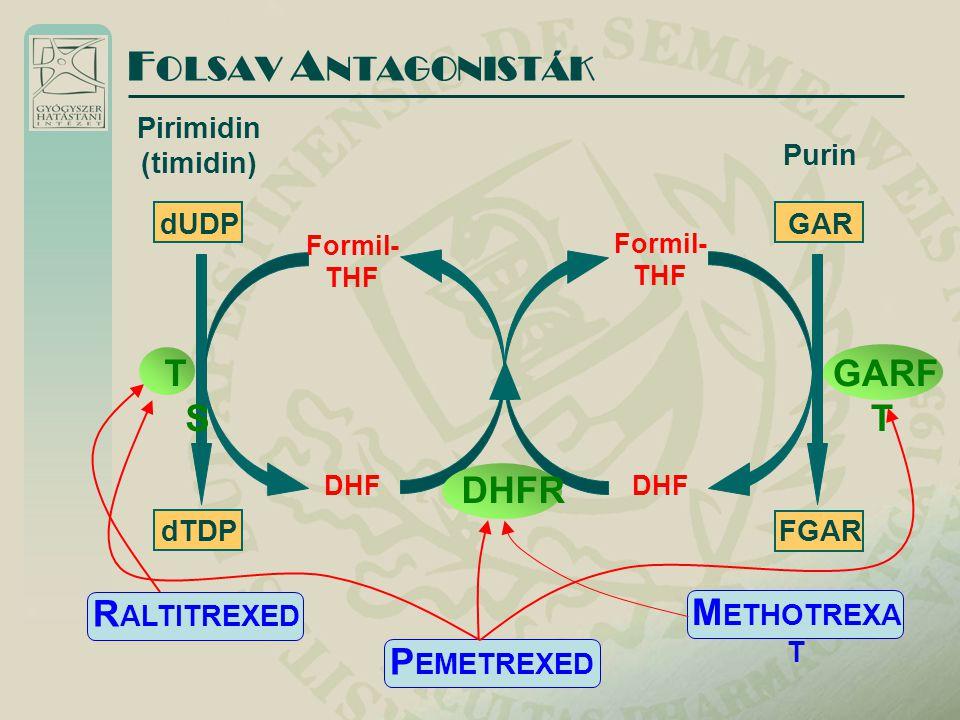 F OLSAV A NTAGONISTÁK Pirimidin (timidin) Purin dUDP dTDP Formil- THF DHF GAR FGAR Formil- THF DHF TSTS GARF T DHFR M ETHOTREXA T R ALTITREXED P EMETREXED