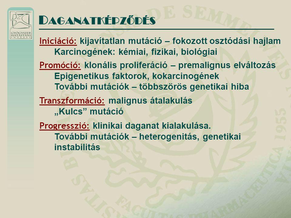 """Iniciáció: kijavítatlan mutáció – fokozott osztódási hajlam Karcinogének: kémiai, fizikai, biológiai D AGANATKÉPZŐDÉS Promóció: klonális proliferáció – premalignus elváltozás Epigenetikus faktorok, kokarcinogének További mutációk – többszörös genetikai hiba Transzformáció: malignus átalakulás """"Kulcs mutáció Progresszió: klinikai daganat kialakulása."""