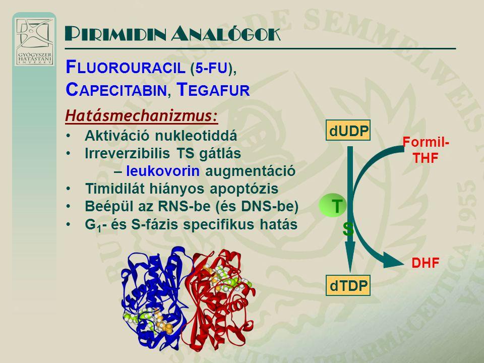Hatásmechanizmus: Aktiváció nukleotiddá Irreverzibilis TS gátlás – leukovorin augmentáció Timidilát hiányos apoptózis Beépül az RNS-be (és DNS-be) G 1 - és S-fázis specifikus hatás P IRIMIDIN A NALÓGOK F LUOROURACIL (5-FU), C APECITABIN, T EGAFUR dUDP dTDP Formil- THF DHF TSTS