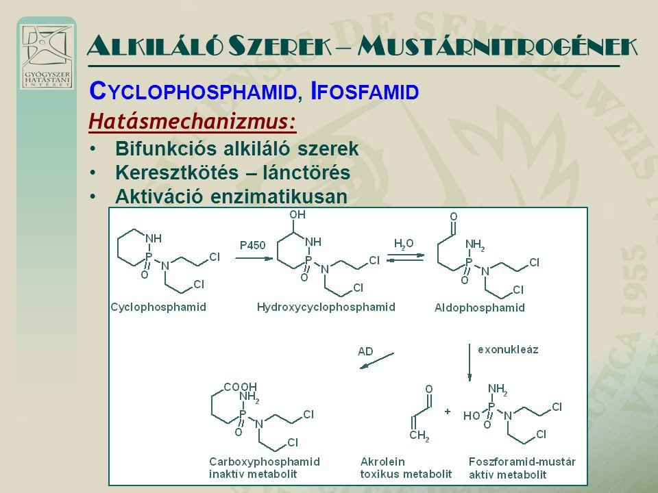 Hatásmechanizmus: Bifunkciós alkiláló szerek Keresztkötés – lánctörés Aktiváció enzimatikusan A LKILÁLÓ S ZEREK – M USTÁRNITROGÉNEK C YCLOPHOSPHAMID, I FOSFAMID