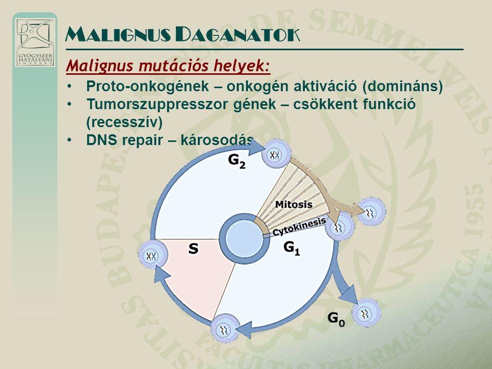 Malignus mutációs helyek: Proto-onkogének – onkogén aktiváció (domináns) Tumorszuppresszor gének – csökkent funkció (recesszív) DNS repair – károsodás M ALIGNUS D AGANATOK