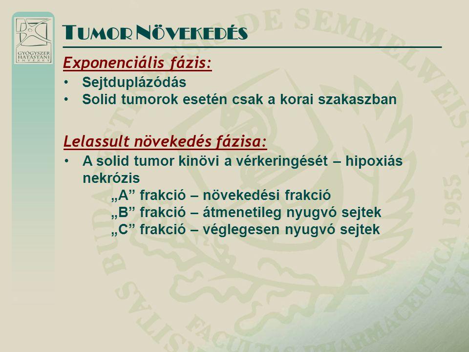 """Exponenciális fázis: Sejtduplázódás Solid tumorok esetén csak a korai szakaszban T UMOR N ÖVEKEDÉS Lelassult növekedés fázisa: A solid tumor kinövi a vérkeringését – hipoxiás nekrózis """"A frakció – növekedési frakció """"B frakció – átmenetileg nyugvó sejtek """"C frakció – véglegesen nyugvó sejtek"""