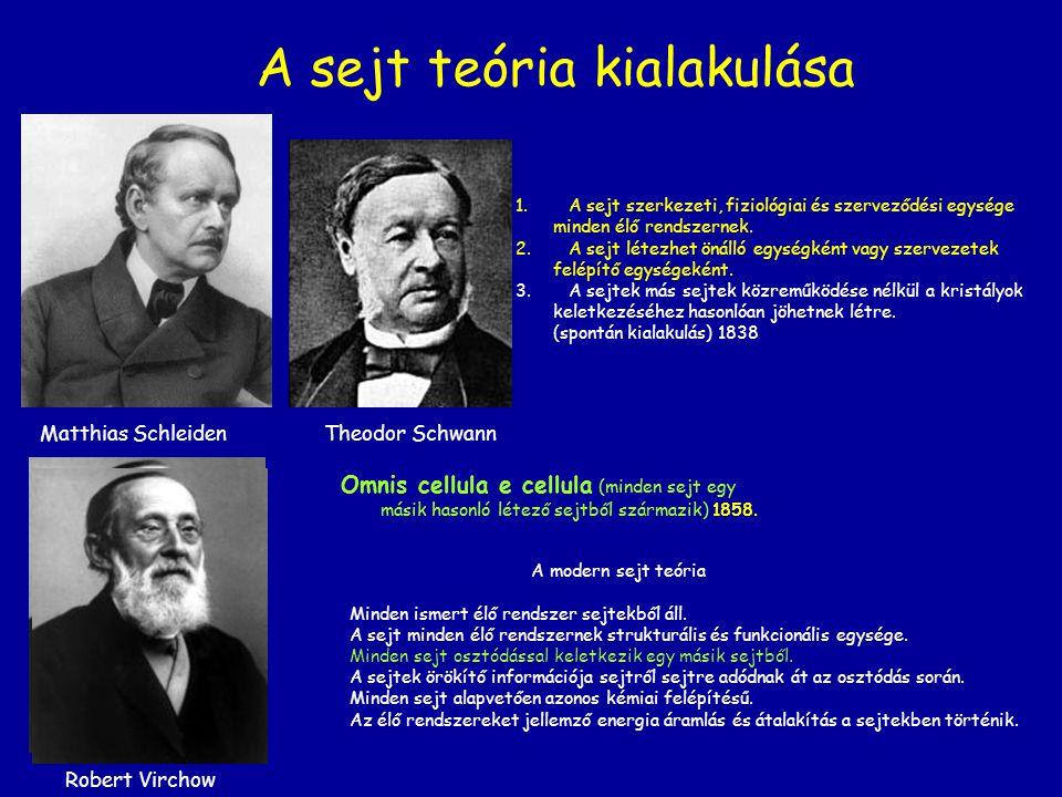 A sejt teória kialakulása Omnis cellula e cellula (minden sejt egy másik hasonló létező sejtből származik) 1858. Matthias Schleiden Theodor Schwann A