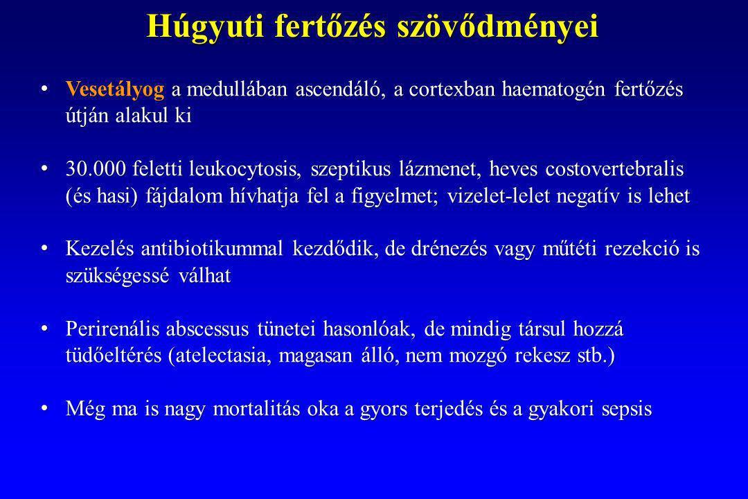 Vesetályog a medullában ascendáló, a cortexban haematogén fertőzés útján alakul ki Vesetályog a medullában ascendáló, a cortexban haematogén fertőzés útján alakul ki 30.000 feletti leukocytosis, szeptikus lázmenet, heves costovertebralis (és hasi) fájdalom hívhatja fel a figyelmet; vizelet-lelet negatív is lehet 30.000 feletti leukocytosis, szeptikus lázmenet, heves costovertebralis (és hasi) fájdalom hívhatja fel a figyelmet; vizelet-lelet negatív is lehet Kezelés antibiotikummal kezdődik, de drénezés vagy műtéti rezekció is szükségessé válhat Kezelés antibiotikummal kezdődik, de drénezés vagy műtéti rezekció is szükségessé válhat Perirenális abscessus tünetei hasonlóak, de mindig társul hozzá tüdőeltérés (atelectasia, magasan álló, nem mozgó rekesz stb.) Perirenális abscessus tünetei hasonlóak, de mindig társul hozzá tüdőeltérés (atelectasia, magasan álló, nem mozgó rekesz stb.) Még ma is nagy mortalitás oka a gyors terjedés és a gyakori sepsis Még ma is nagy mortalitás oka a gyors terjedés és a gyakori sepsis Húgyuti fertőzés szövődményei