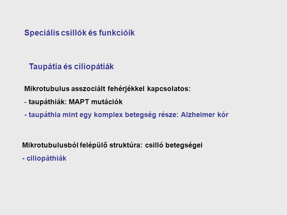 Speciális csillók és funkcióik Taupátia és ciliopátiák Mikrotubulus asszociált fehérjékkel kapcsolatos: - taupáthiák: MAPT mutációk - taupáthia mint e