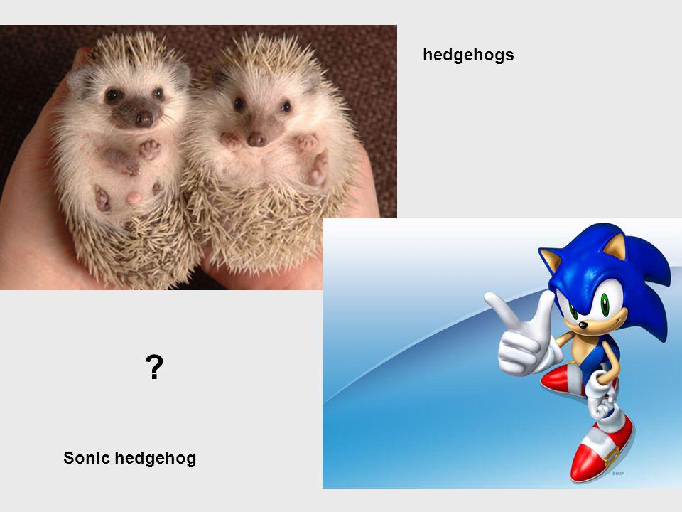 Sonic hedgehog hedgehogs ?