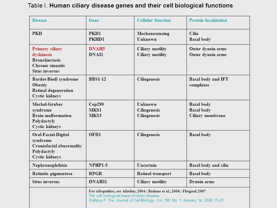 DiseaseGeneCellular functionProtein localization PKDPKD1 PKHD1 Mechanosensing Unknown Cilia Basal body Primary ciliary dyskinesis Bronchiectasis Chron