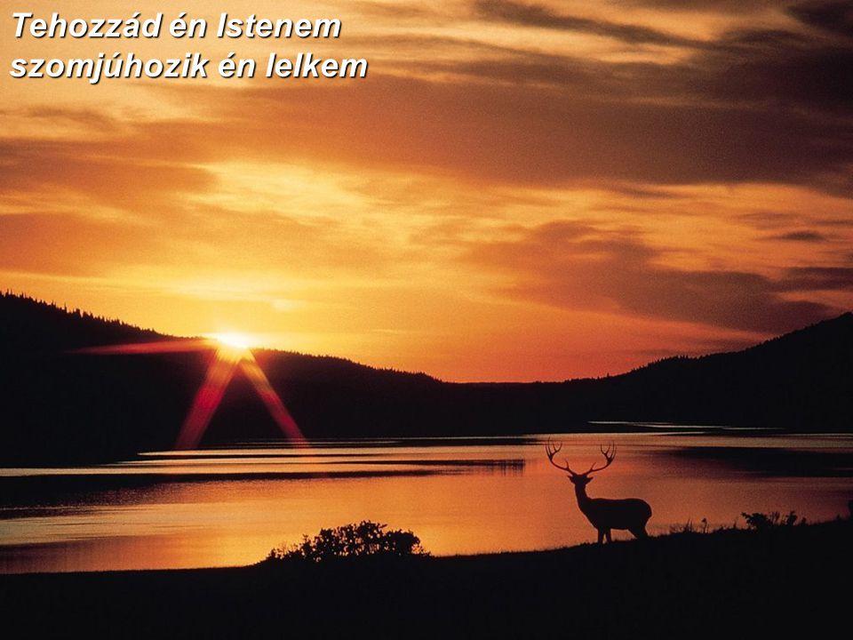 Lelkem úgy óhajt Uramra és hozzá fohászkodik