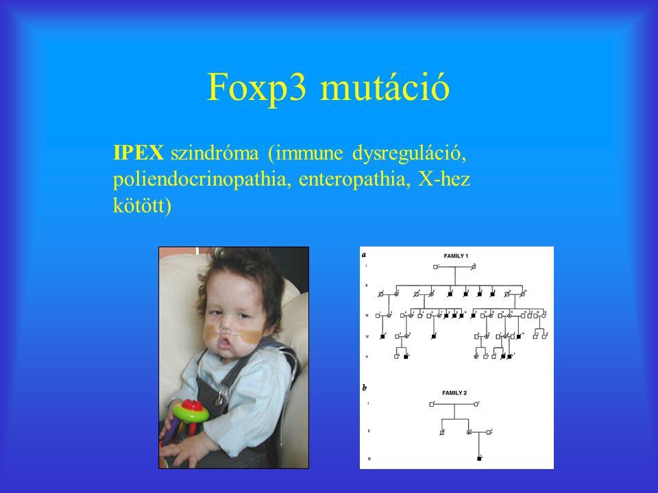 Foxp3 mutáció IPEX szindróma (immune dysreguláció, poliendocrinopathia, enteropathia, X-hez kötött)