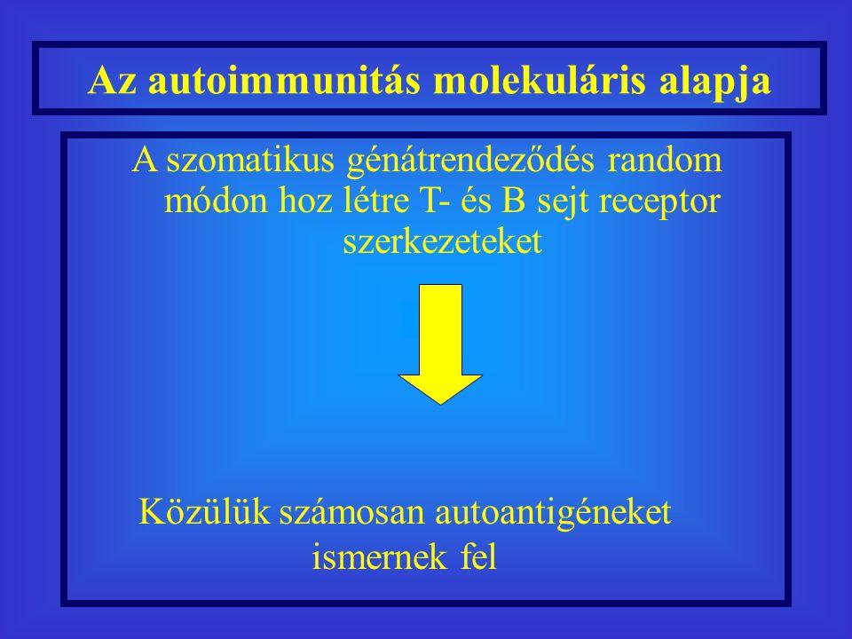 A szomatikus génátrendeződés random módon hoz létre T- és B sejt receptor szerkezeteket Az autoimmunitás molekuláris alapja Közülük számosan autoantigéneket ismernek fel