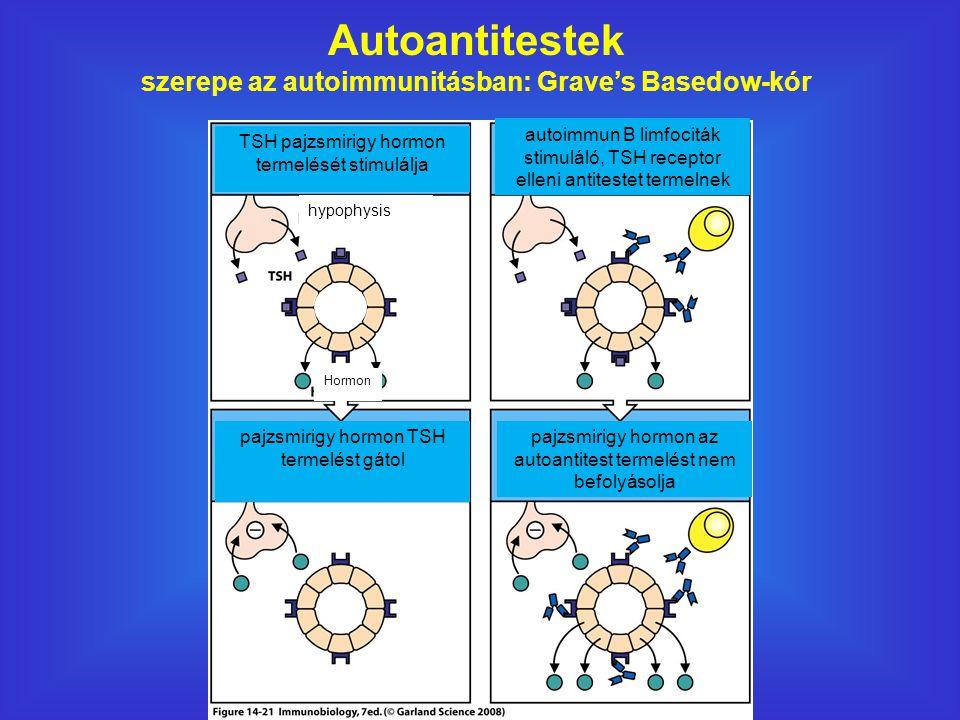 Autoantitestek szerepe az autoimmunitásban: Grave's Basedow-kór TSH pajzsmirigy hormon termelését stimulálja pajzsmirigy hormon TSH termelést gátol autoimmun B limfociták stimuláló, TSH receptor elleni antitestet termelnek pajzsmirigy hormon az autoantitest termelést nem befolyásolja Hormon hypophysis